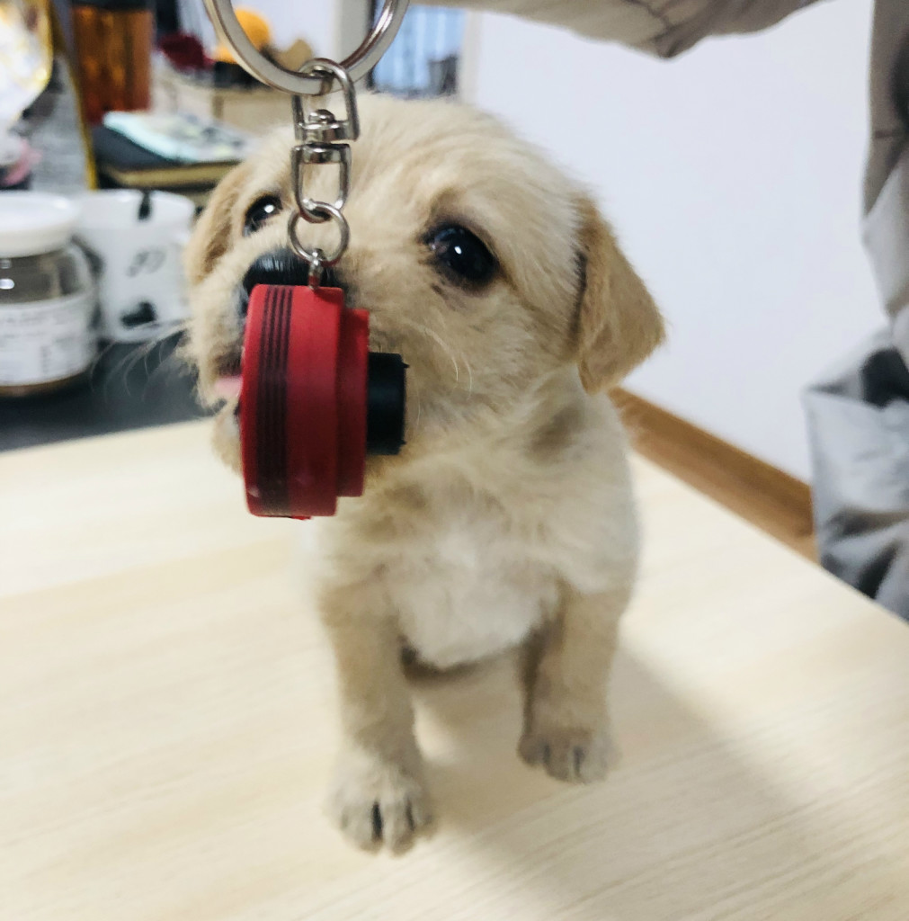 puppy with keychain_meitu_1